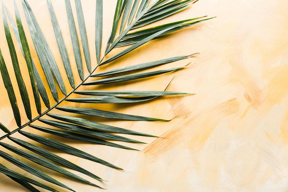 Palm branch against a tan wall